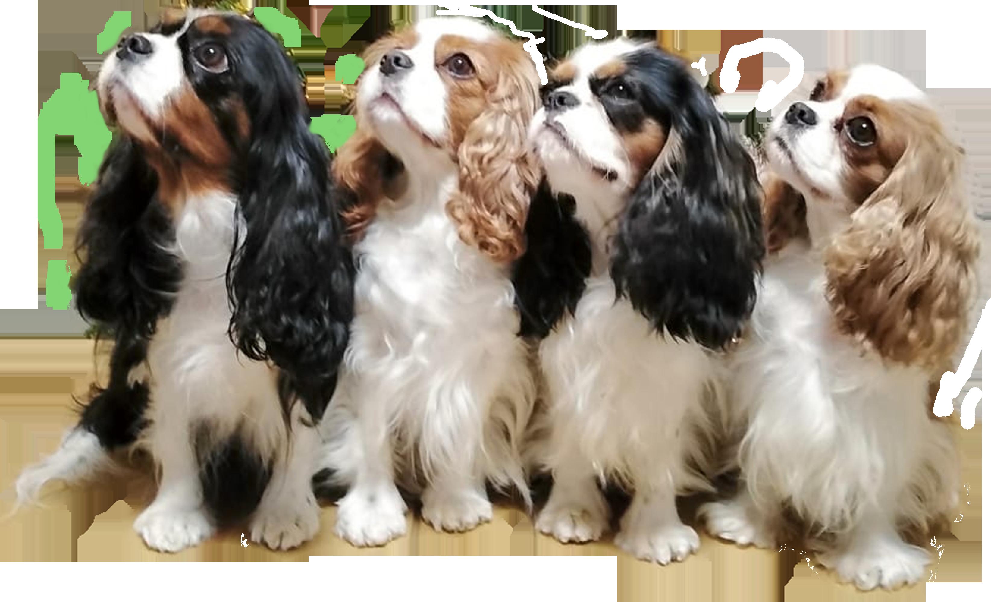 psy z Rondelu